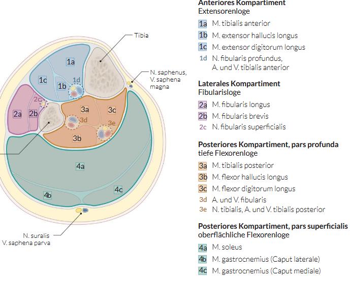 kompartmentsyndrom unterschenkel