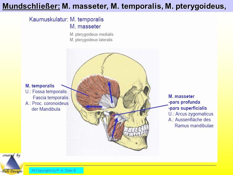 142. Welche Muskeln gehören zu der Gruppe Mundschließe... | 12-2015 ...