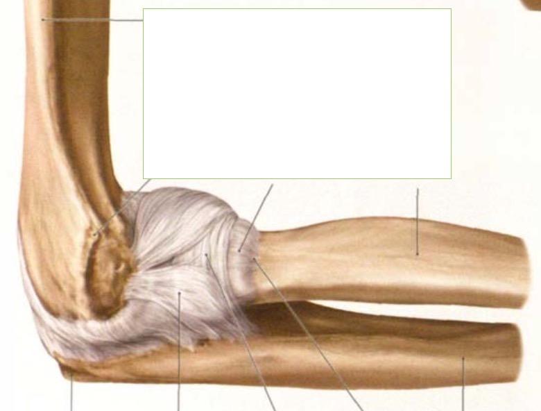 Welche Bänder und damit zusammenhängende wichtige Stru... | Anatomie ...