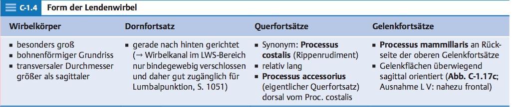 Besonderheiten eines Lendenwirbels.Wirbelkörper, Dornfo ...