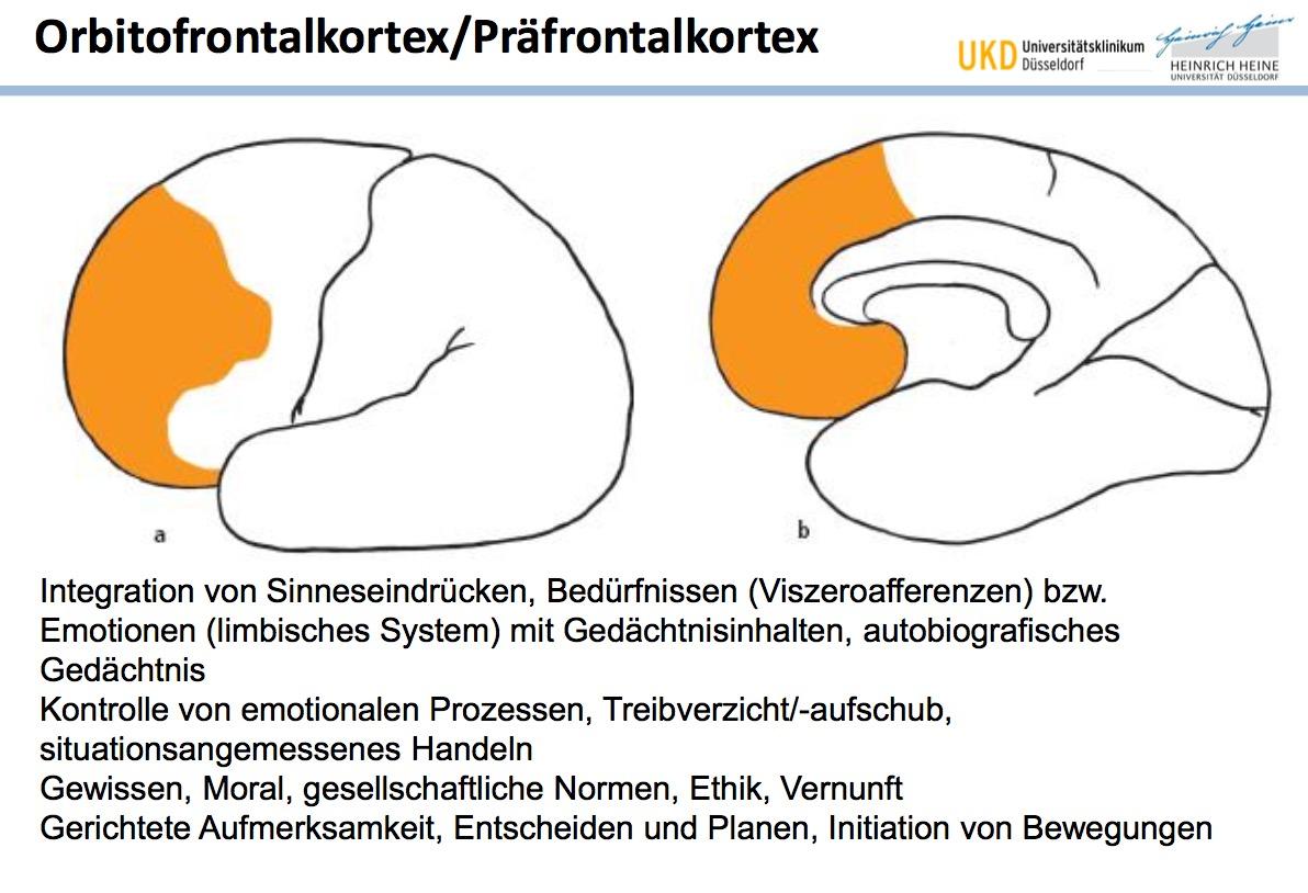 Orbitofrontalkortex/PräfrontalkortexFunktionen | Neuroanatomie ...