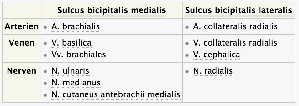 Was läuft durch den Sulcus bicipitalis medialis und lat ...
