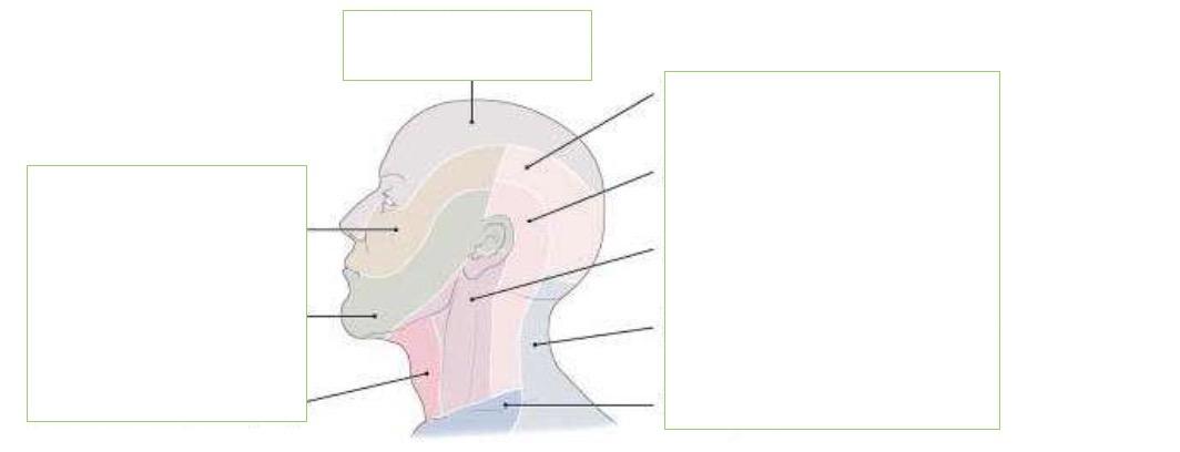 Welche Bereiche werden von welchen Nerven des Plexus cer ...
